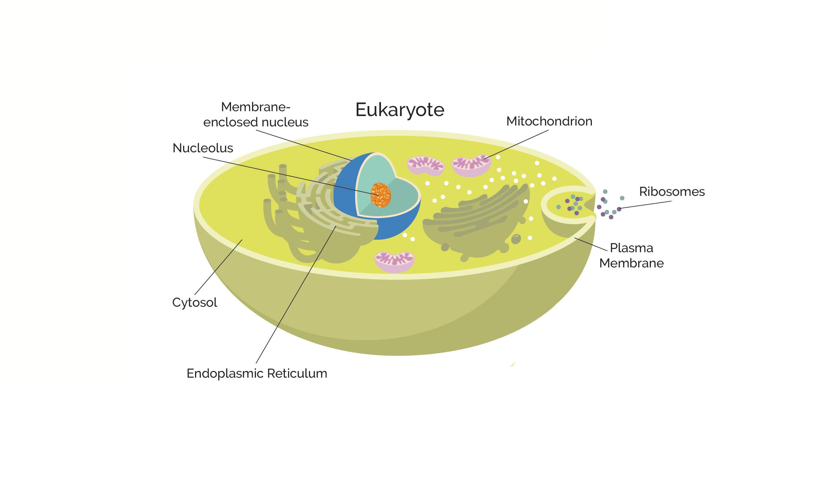 Procariotas Vs Eucariotas Cuáles Son Las Diferencias Clave Redes Tecnológicas