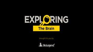 Exploring The Brain