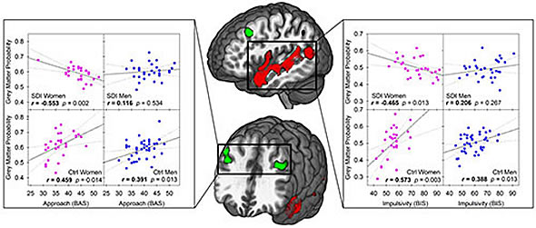 effects of sex on gray matter volume