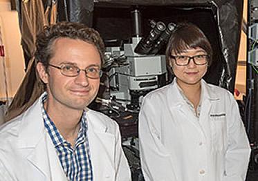 Washington University researchers