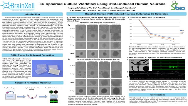 3D Spheroid Culture Workflow using iPSC-induced Human Neurons