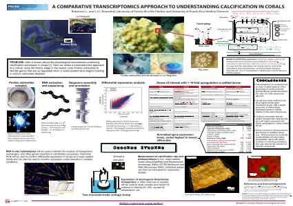 A Comparative Transcriptomics Approach To Understanding Calcification In Corals