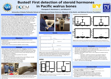 Busted! First Detection of Steroid Hormones in Pacific Walrus Bones