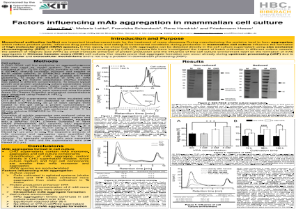 Factors influencing mAb aggregation in mammalian cell culture