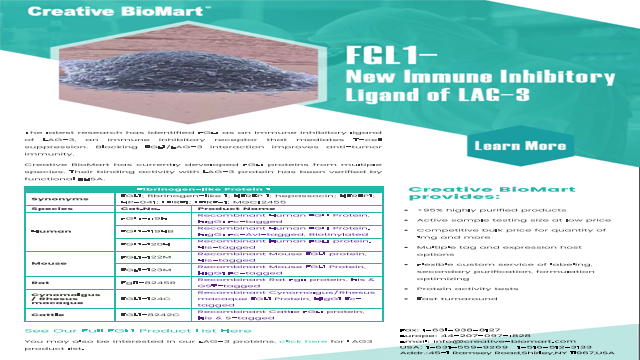 FGL1-New Immune Inhibitory Ligand of LAG3