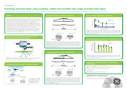 Homology-directed repair using synthetic crRNA and tracrRNA with single-stranded DNA oligos