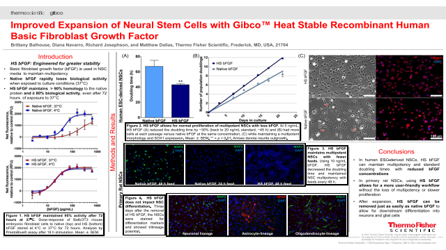 Improved Expansion of Neural Stem Cells with Gibco™ Heat Stable Recombinant Human Basic Fibroblast Growth Factor