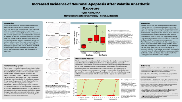 Increased Incidence of Neuronal Apoptosis After Volatile Anesthetic Exposure