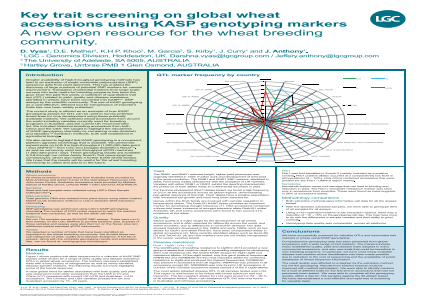 Key trait screening on global wheat accessions using KASP genotyping markers