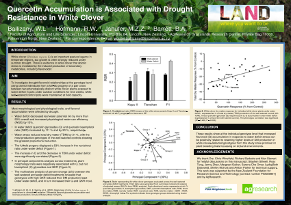 Quercetin Accumulation is Associated with Drought  Resistance in White Clover