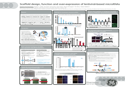 Scaffold design, function and over-expression of lentiviral-based microRNAs