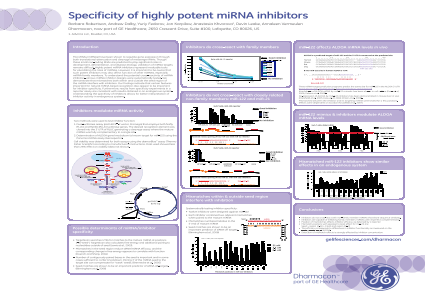 Specificity of highly potent miRNA inhibitors