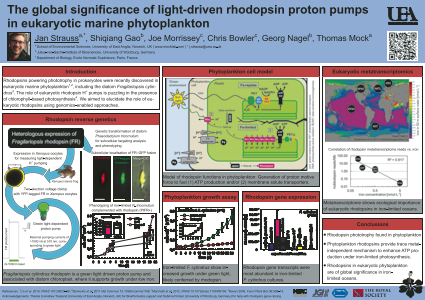 The global significance of light-driven rhodopsin proton pumps in eukaryotic marine phytoplankton