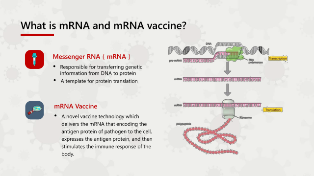 What is mRNA and mRNA vaccine?