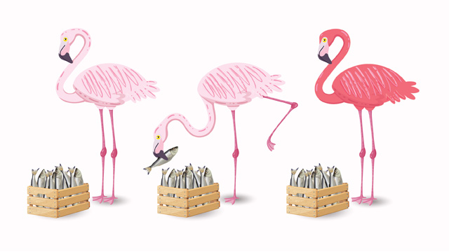 Flamingos eating fish out of basket and changing color.