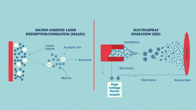 Matrix-assisted laser desorption/ionization (MALDI) and Electrospray ionization (ESI).