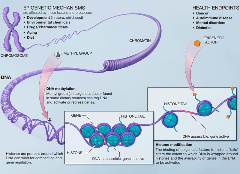 Epigenetics and Drug Discovery | Technology Networks