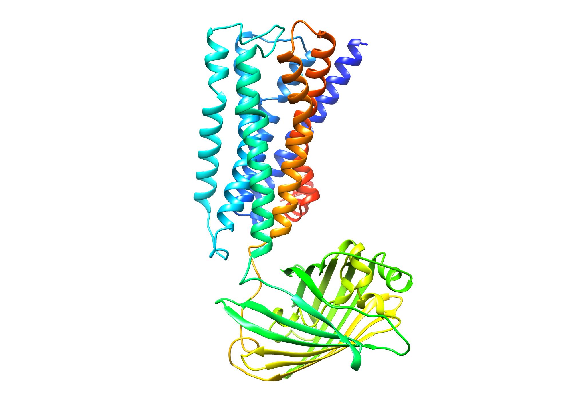 simulatedstructureofpsychlightconsistingof5 ht2ar(gray),alinker(magenta)andacpgfp(green) transparentbackgroundcreditdongetal1619610663752