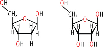 The Chemical Structures of Deoxyribose (left) and Ribose (right) Sugars