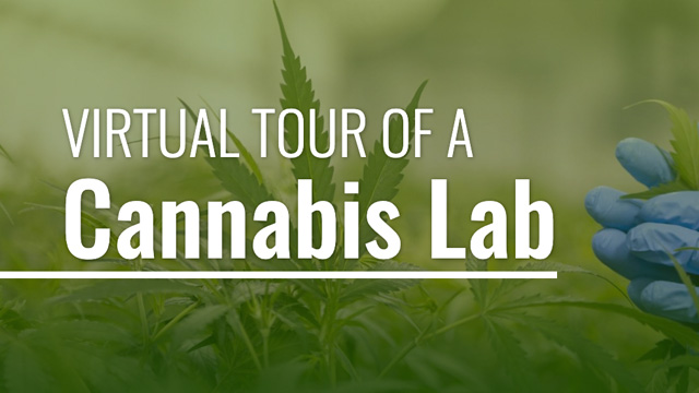 Virtual Tour Of A Cannabis Lab
