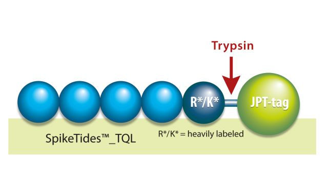 Absolutely Quantified Peptides SpikeTides™ TQL