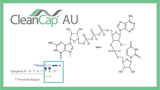 CleanCap® AU – Capping Technology for Self-Amplifying mRNA