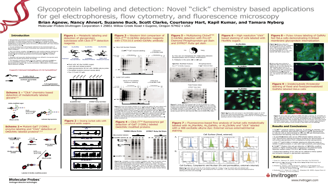 Glycoprotein Labeling and Detection: Novel Click Chemistry-based Applications for gel Electrophoresis, Flow Cytometry and Fluorescence Microscopy