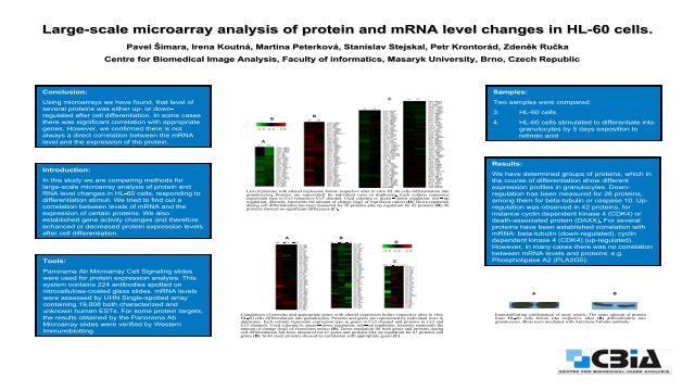Large-scale Microarray Analysis of Protein and mRNA Level Changes in HL-60 Cells