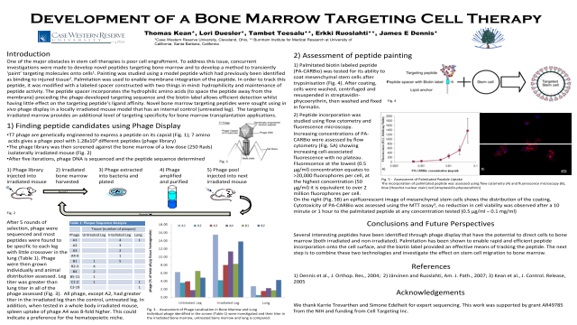 Development of a Bone Marrow Targeting Cell Therapy