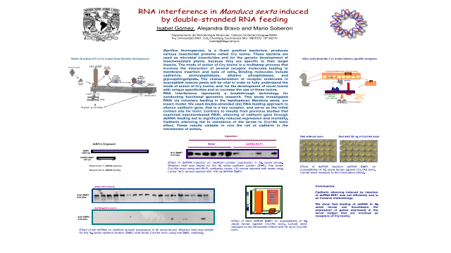 RNA interference in Manduca sexta induced by double-stranded RNA feeding