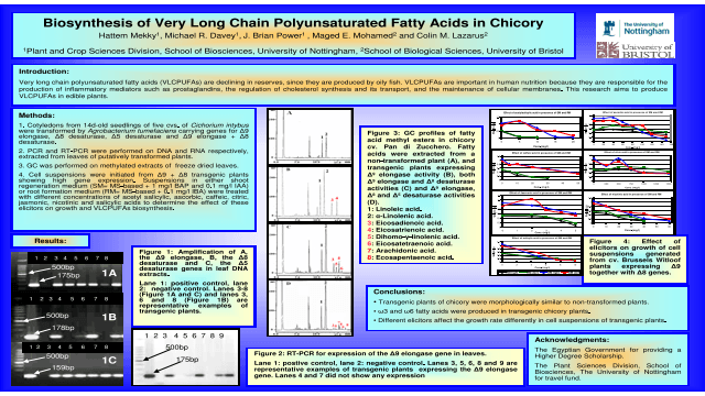 Biosynthesis of Very Long Chain Polyunsaturated Fatty Acids in Chicory