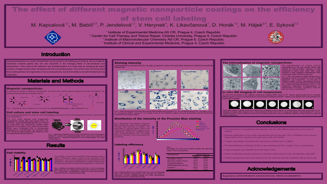 The effect of different magnetic nanoparticle coatings on the efficiency of stem cell labeling