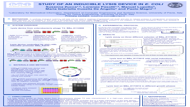 Study of an inducible lysis device in E. coli