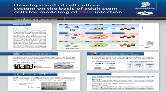 Development of cell culture system on the basis of adult stem cells for modeling of HBV  infection