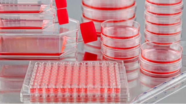 10 Tips for Successful Development of Cell Culture Assays