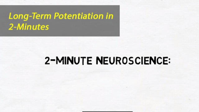 2-Minute Neuroscience: Long-Term Potentiation (LTP)