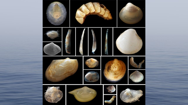 2000% Increase in Knowledge of Seafloor Mollusc Biodiversity
