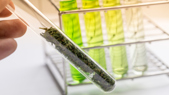 4 Considerations for Creating Standardized Cannabis Extracts