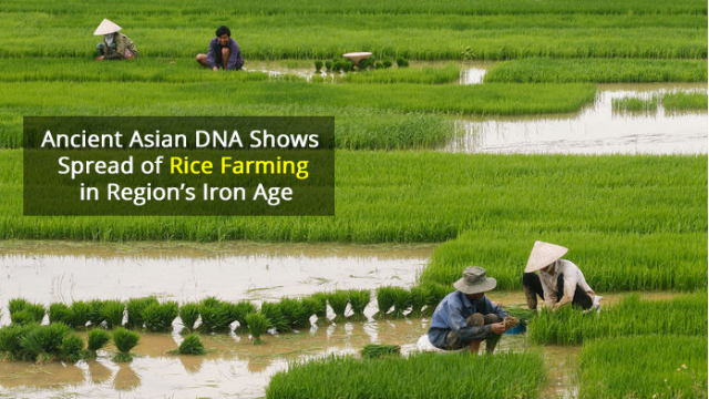 4000-Year Old DNA Helps Track the Spread of Rice Farming in Asia