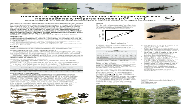 Treatment of Highland Frogs from the Two Legged Stage with Homeopathically Prepared Thyroxin (10-11 – 10-21)