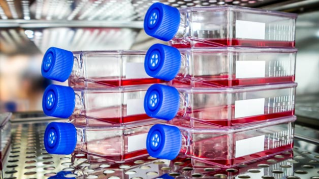 7 Tips for Successful Development of 3D Cell Culture Assays