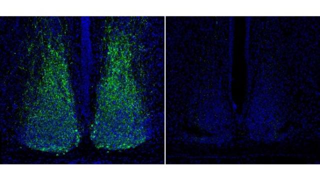 Single gene controlling jet lag discovered