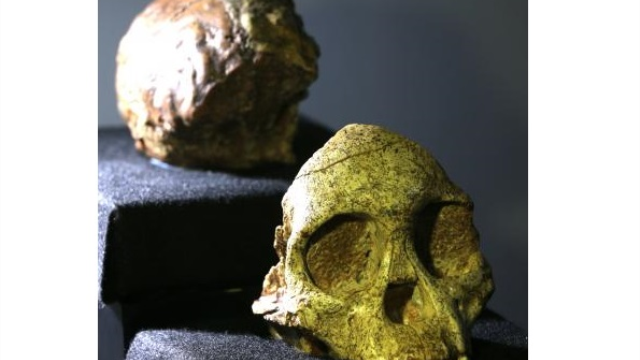 Scans reveal South African's Taung Child's skull and brain not human-like in expansion
