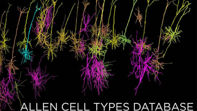 Allen Cell Types Database launched