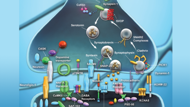 Synaptic Function Antibodies from BioLegend