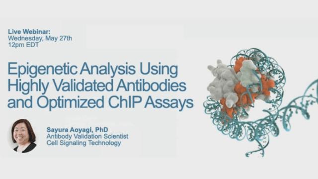 Epigenetic Analysis Using Highly Validated Antibodies and Optimized ChIP Assays