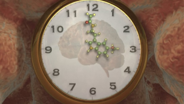 New 'reset' button discovered for circadian clock