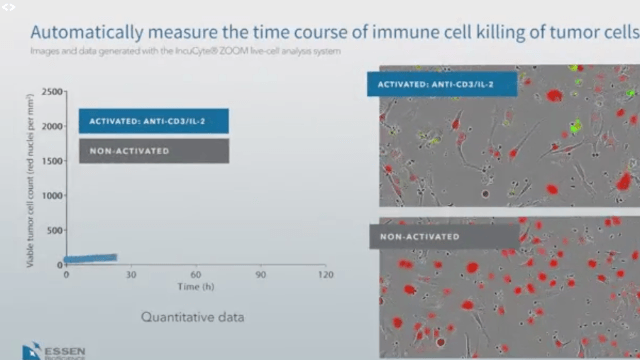 Immune Cell Killing of Tumor Cells | Automatically Measure the Time Course with the IncuCyte® System