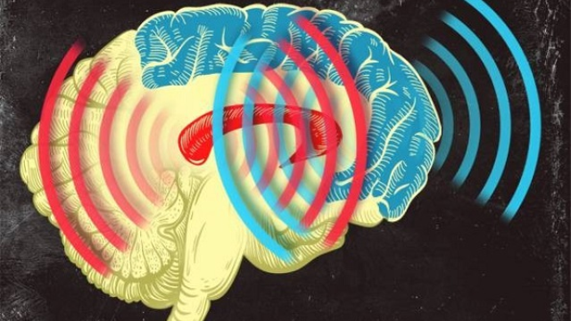 Synchronized brain waves enable rapid learning