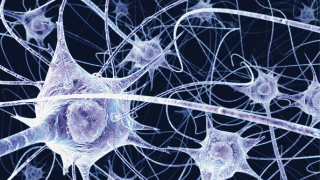 Unexpected origin for important parts of the nervous system